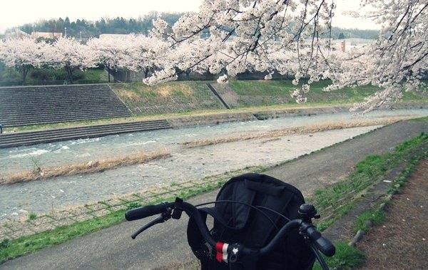 Saya, sepeda, dan Sakura